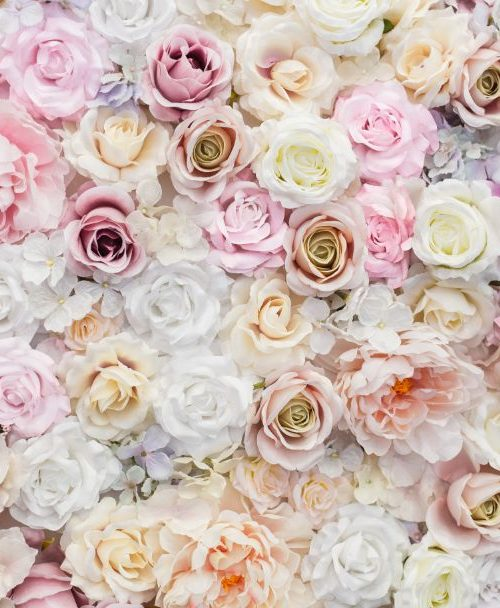beautiful-background-roses-valentine-s-day (1)